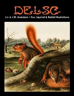 J.J. & J.W. Audubon - Fox, Squirrel & Rabbit Illustrations by [Paquette Widmann, Melanie]