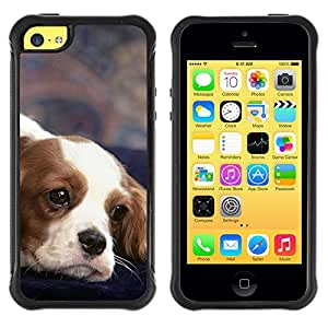 ZETECH CASES / Apple Iphone 5C / CAVALIER KING CHARLES SPANIEL DOG / caballeros rey Charles spaniel perro / Robusto Caso Carcaso Billetera Shell Armor Funda Case Cover Slim Armor