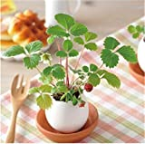 LOSOUL Potted Radiation Simulation Eggshell Home Decoration Indoor
