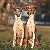 Italian Greyhounds 2007 Calendar