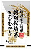 Japanese White Rice Koshihikari Made in Niigata 5kg