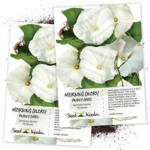 - Seed Needs, Pearly Gates Morning Glory (Ipomoea Tricolor) Twin Pack of 75 Seeds Each