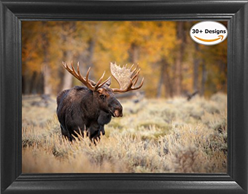 moose pictures - 5