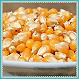 New Rare Hierloom Low Budget DIY Backyard 30 Popcorn seeds GMO Free fragrant B045