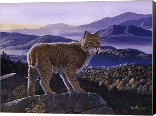 - Bobcat by Don Balke Canvas Art Wall Picture, Museum Wrapped with Black Sides, 16 x 12 inches