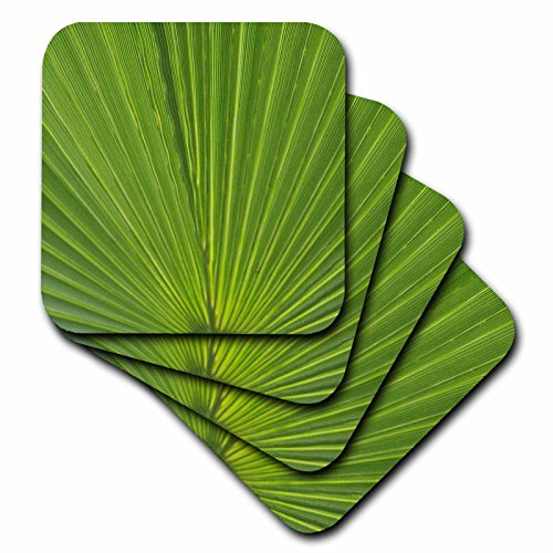 [Danita Delimont - Leaves - Detail of Palm Tree Frond - set of 4 Coasters - Soft (cst_228252_1)] (Palm Frond Placemat)