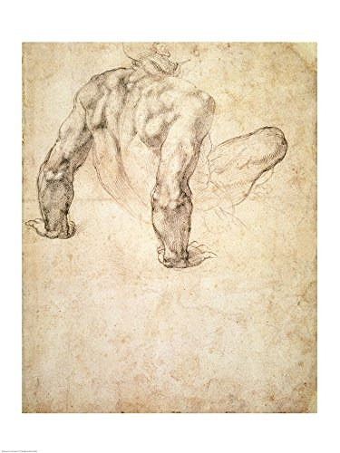 W.63r Study of a male nude, leaning back on his hands by Michelangelo Buonarroti Art Print, 18 x 24 inches