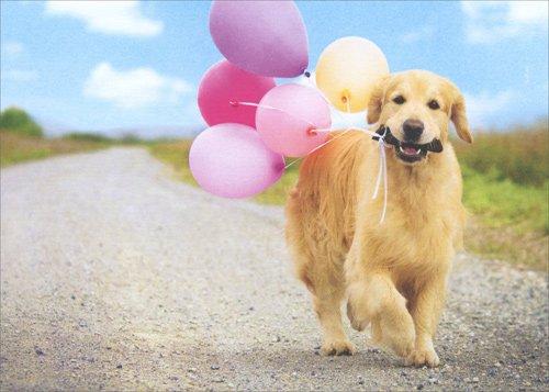 (Golden Dog Carrying Balloons - Avanti Deluxe Matte Blank Card by Avanti Press)