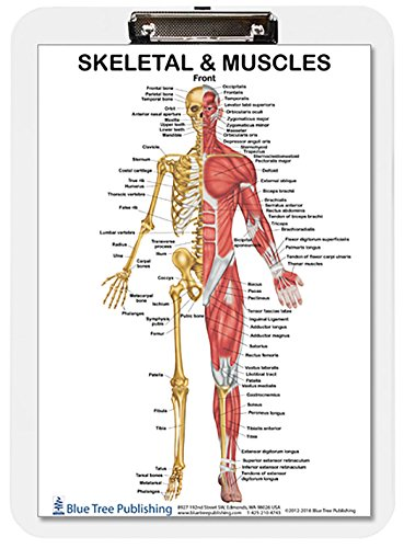 (Muscle Anatomy and Skeletal Dry Erase Clipboard two sided (Muscle))