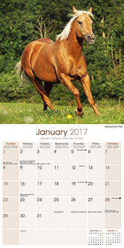 Butterflies Calendar 2016 Wall Calendars Animal Calendar Monthly Wall Calendar By Avonside