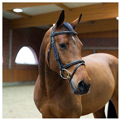 Bridon Capezzina combinata Horze Sparta Nero Cavallo XL