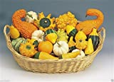 Ornamental Gourd Mix 25 Seeds - Open-Pollinated (Small Mixed) Organic Non-GMO
