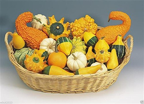 - Organic Non-gmo Ornamental Gourd Mix 25 Seeds - Open-pollinated (Small Mixed)