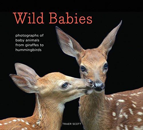 Read Online Wild Babies: Photographs of Baby Animals from Giraffes to Hummingbirds pdf epub