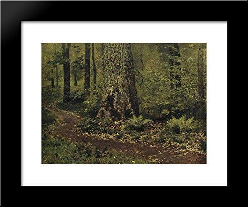 Footpath in a Forest. Ferns. 20x24 Framed Art Print by Isaac Levitan