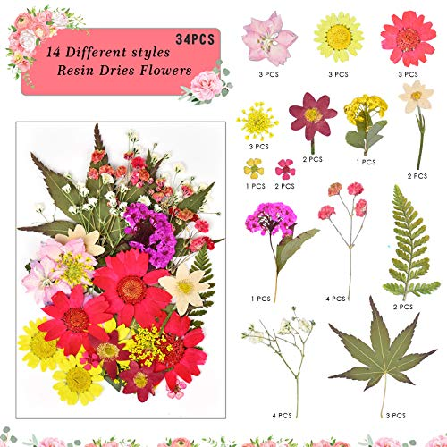 105 Pieces Real Dried Pressed Flowers Natural Blue Dried Flowers Leaves Set with 2 tweezers Colorful Chrysanthemum Daisy Flower for DIY Candle decoration Resin Jewelry Pendant Crafts Making Art Floral