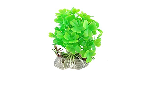 Amazon.com : eDealMax plástico acuario Paisaje Base de cerámica plantas de trébol, Verde : Pet Supplies
