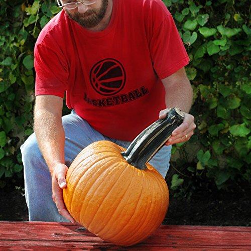 Pumpkin Wolf Seeds - Vegetable Seeds Package - Harris Seeds