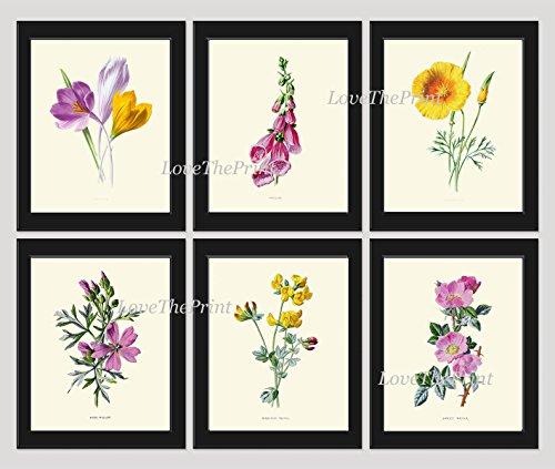 flower-print-set-of-6-antique-wildflowers-crocus-foxglove-california-poppy-eschscholzia-musk-mallow-