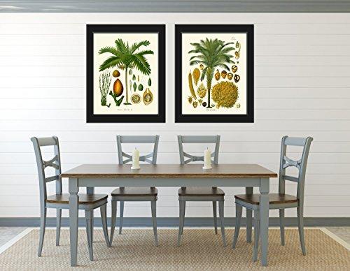 Palm Tree Art Print Set of 2 Antique Beautiful Green Plants Tropical Seeds Chart Island Nature Home Room Wall Decor Unframed KOH