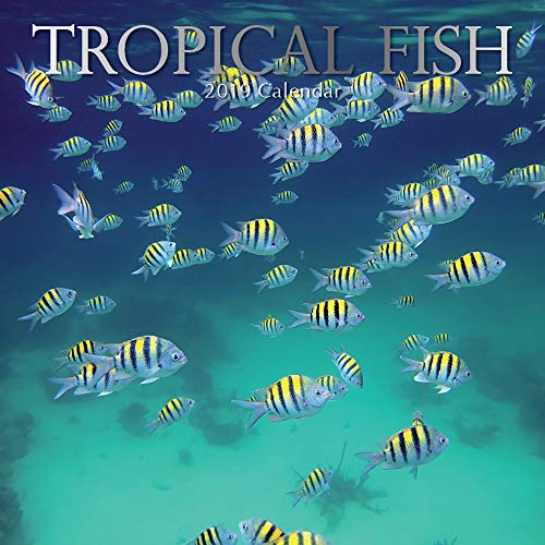 2019 Wall Calendar - Tropical Fish Calendar, 12 x 12 Inch Monthly View, 16-Month, Sea Animals Theme, Includes 180 Reminder Stickers