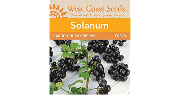 Organic Garden Huckleberry 50 seed  a fruit for cooking and sweetening Non-Gmo