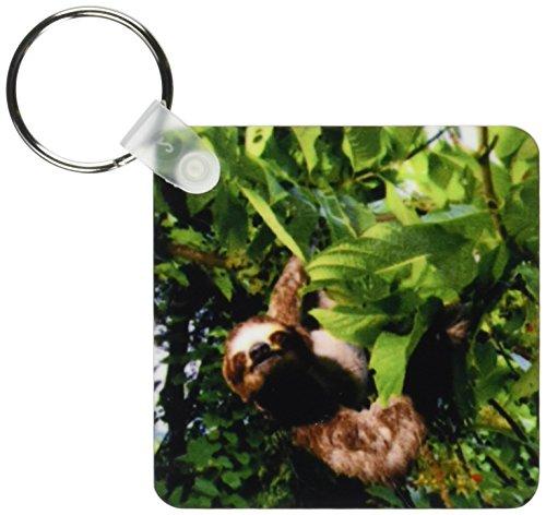 3Drose Panama, Panama City, Three-Toed Sloth Wildlife - Sa15 Czi0561 - Christian Ziegler - Key Chains, 2.25 X 4.5 Inches, Set Of 2 (Kc_86913_1) - 3D Rose (Home Improvement)