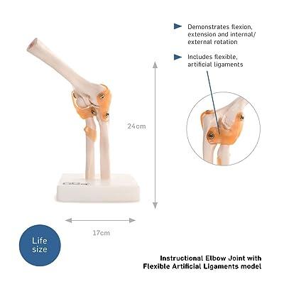 66Fit - Modelo de articulación de Codo: Deportes y aire libre