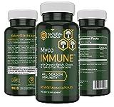 Wellness Supplement - Natural Stacks MycoIMMUNE - 60 Vegetarian Capsules - All Season Immunity - Organic Reishi, Chaga, and Turkey Tail Mushroom Supplement - Antioxidant Properties - Maximum Strength