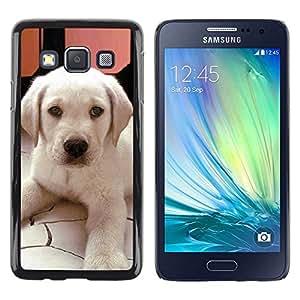 Be Good Phone Accessory // Dura Cáscara cubierta Protectora Caso Carcasa Funda de Protección para Samsung Galaxy A3 SM-A300 // Labrador Small Puppy Dog Canine