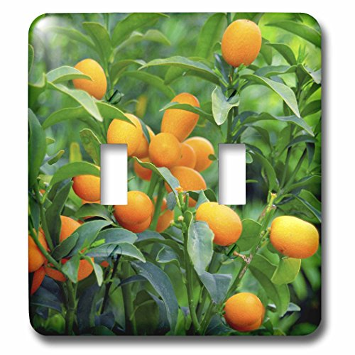 3dRose lsp_83504_2 Kumquat Fruit Tree, Agriculture Na01 P...