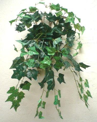 Ivy Bush - Phoenix Silk ENGLISH IVY Leaves Hanging Bush 25