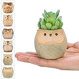 occer 6 Pcs 2.5 Inches Mini Owl Pots Succulents Bonsai Plant pots,Cute Flower Cactus Ceramic Pot,Container Planter with a Hole,Perfect for Home Decoration,Office Desk,Kitchen Counter, Best Gift Idea