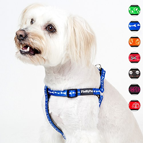 Fitting Dog - 7