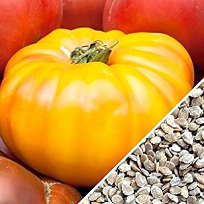 Yellow Beefsteak Tomato Seeds - A LARGE great slicer and full of flavor.!!!(25 - Seeds) : Garden & Outdoor