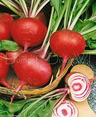 Organic Beet Tall Top Early Wonder 70+ Seeds Sweet Heirloom Non-GMO