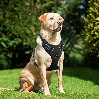 Amazon.com : Dog Harness, No Pull Dog Harness, Front Range Dog ...