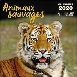 Calendrier 2020 Animaux.Amazon Fr Animaux Sauvages Calendrier 2020 De