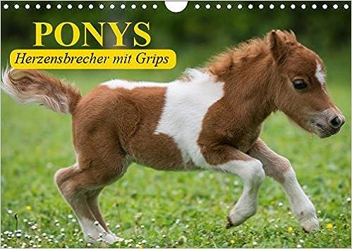 Ponys. Herzensbrecher mit Grips Wandkalender 2019 DIN A4 ...