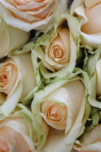 - A Bouquet of Delicate Peach Colored Roses Flower Journal: 150 Page Lined Notebook/Diary
