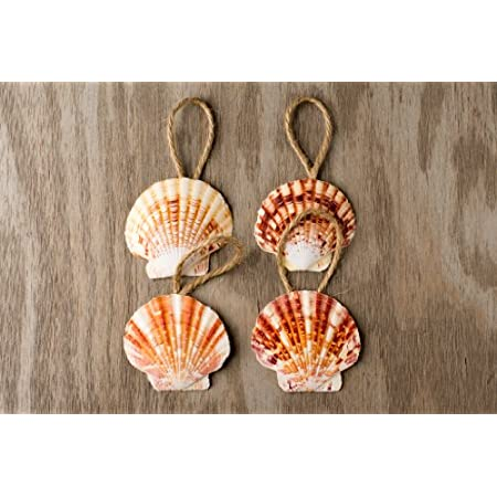 516A7gm%2BlFL._SS450_ Seashell Christmas Ornaments