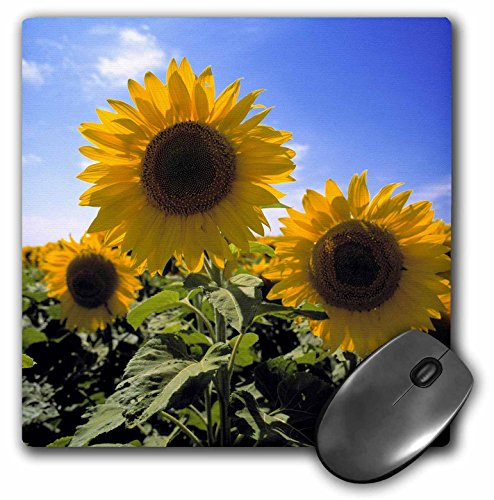 3drose-llc-8-x-8-x-025-inches-mouse-pad-north-dakota-sunflowers-in-cass-county-ric-ergenbright-mp-93