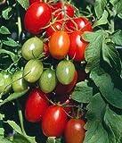 Juliet Grape Tomato 15 Seeds - High yields!