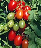 Juliet Grape Tomato 15 Seeds - High yields!