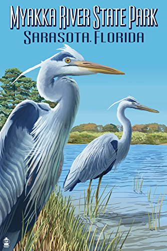 Myakka River State Park Sarasota, Florida - Blue Heron (9x12 Fine Art Print, Home Wall Decor Artwork Poster)