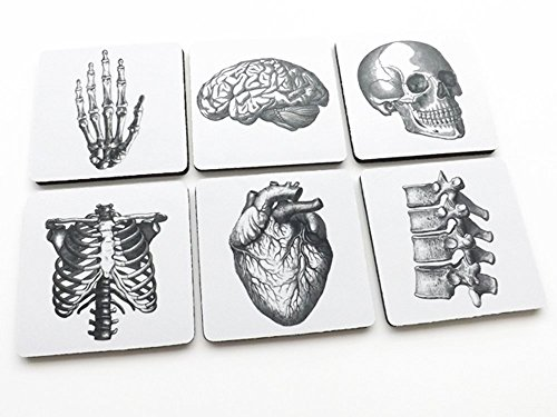 square Anatomy Coasters 3.5 inch mousepad rubber neoprene skull brain anatomical heart med student doctor nurse gift