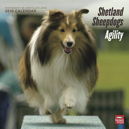 Shetland Sheepdogs Agility 2010 Square Wall (2010 Calendar Sheepdog)