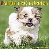 Just Shih Tzu Puppies 2018 Wall Calendar (Dog Breed Calendar)