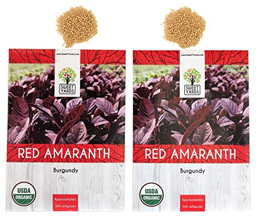 (Organic Red Amaranth (Burgandy) Seeds - 2 Seed Packets! - Over 1000 Open Pollinated Non-GMO USDA Organic Seeds )