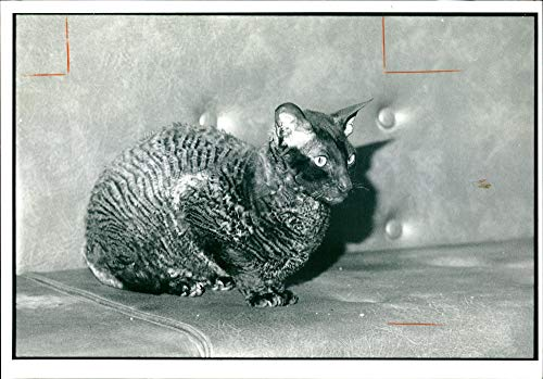 Vintage photo of Onyx a chinchilla a serious case of neglect.